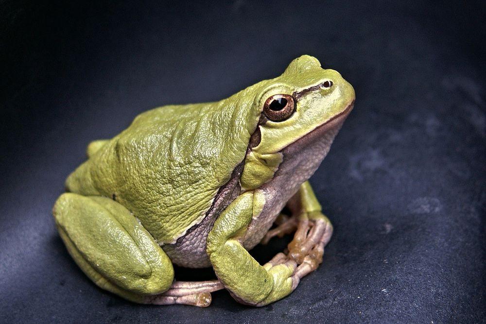 jako první snězte žábu