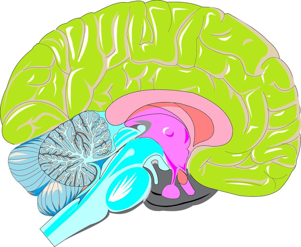 tři mozky v jednom